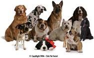 raças-de-cães