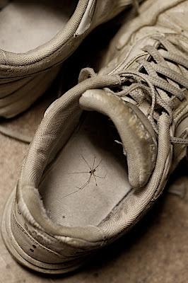 Spider in Shoe