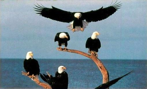 https://i0.wp.com/lh4.ggpht.com/_DeVkd7Dag10/TFAlsk_duWI/AAAAAAAADOo/0Pxlav2PJPk/Eagles_thumb.jpg