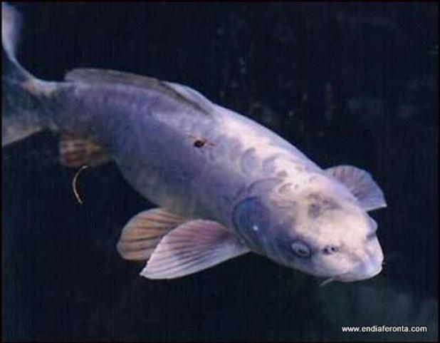 fish-faces04.jpg