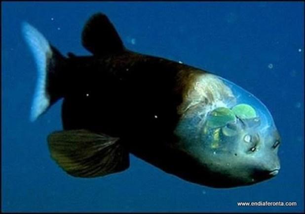 fish-faces06.jpg