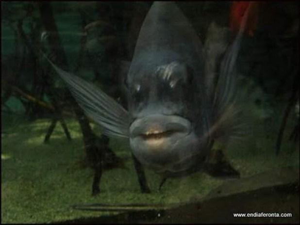 fish-faces08.jpg