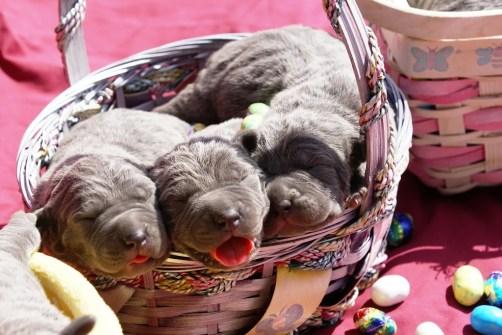 Belle's Easter Babies