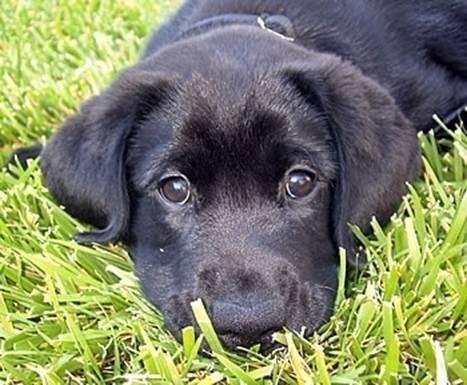 [puppy[1].jpg]