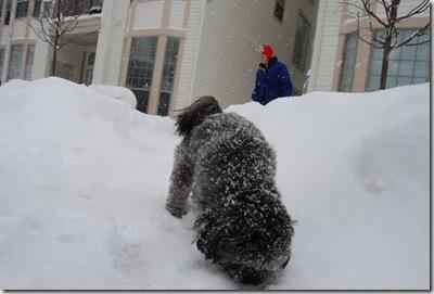 Snow 035