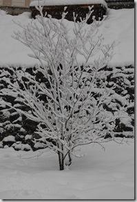 Snow 165