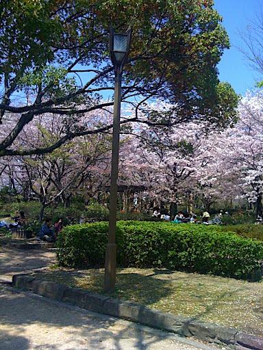 Sakura in Himeji Castle Park