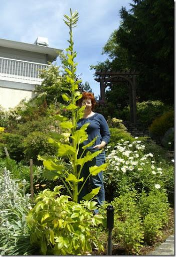 Jun 18 2010 lily