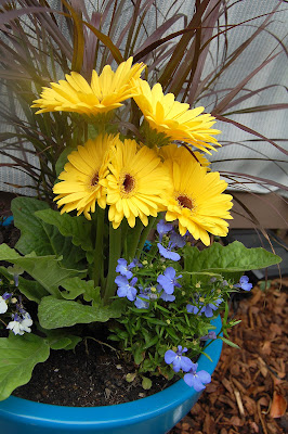 The yellow totally pops with the blue pot.