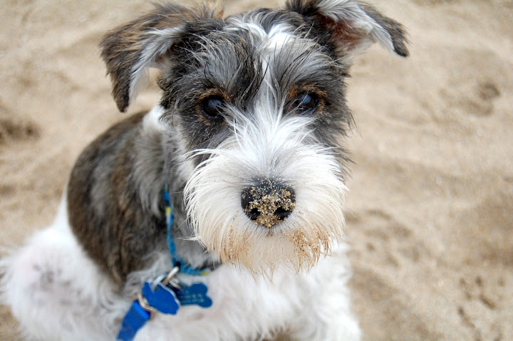 Getting down and dirty, Hilo ended up with tons of sand on his face!