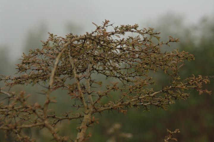 Thorny Bush by Vaibhav