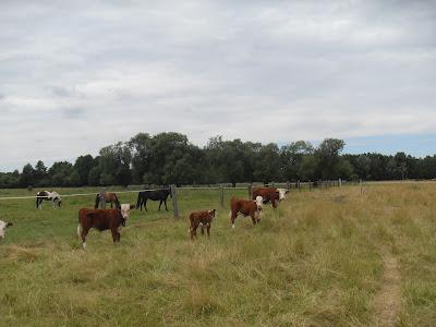 Kauert´s Hereford Rinderzucht im brandenburgischen Trebbin bei Berlinbrandenburgischen