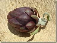 first artichoke to eat_1_1_1