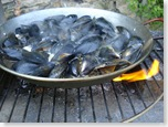 mussels2_1_1