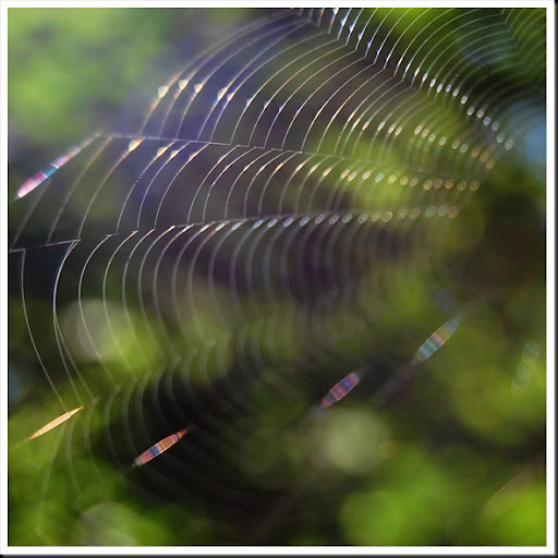 Web Square 3