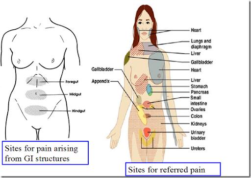 Pain & Nociception -