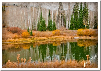 DSC_0014-pond-Timber-Lakes