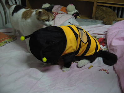 肥侠穿上蜜蜂装之后做低头认罪状