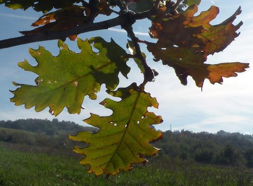 foto di Alessandro Santulli, dal sito picasaweb.google.com
