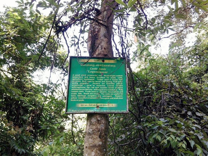 சரக்கொன்றை