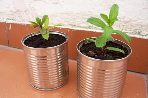 reciclar latas de comida como macetas