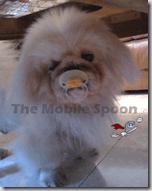 Dog-MobileSpoon
