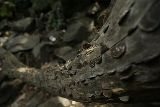 money-alberi (6)