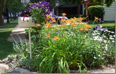 drought tolerant and hardy
