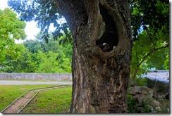 HDR_Tree