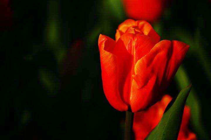 Orange and Shiny