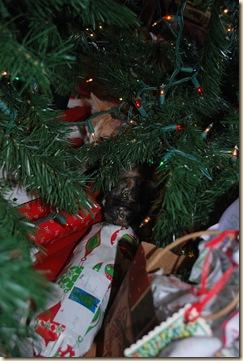 sweet kitties under the tree