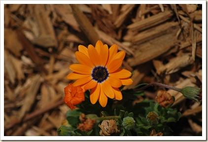 my favorite flower in my garden