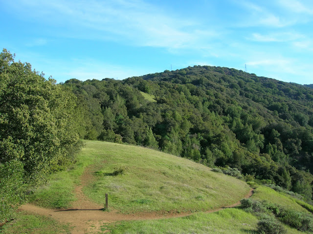 Black Mountain from Ewing Hill