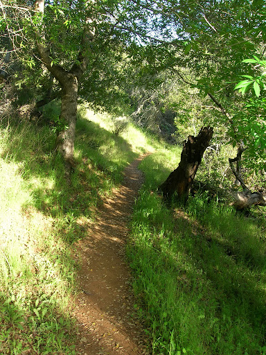 Single track on the Grapevine Trail