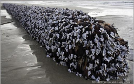 """Resultado de imagen de Encuentran un """"monstruo marino con rastas"""" en Nueva Zelanda"""