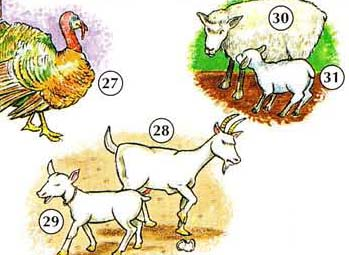 27. turkey 28. goat 29. kid 30. sheep 31. lamb