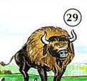 29. bison
