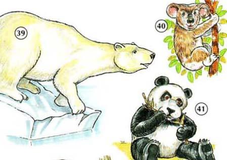 39. l 'osso polari 40. koala (bear) 41. panda