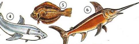 4. Shark 5. plie 6. espadon