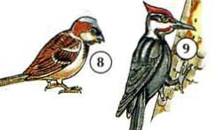 8. 9 ọpẹ. Woodpecker a. beak