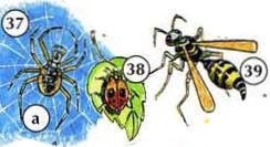 37. spider a. web 38. ladybug 39. wasp
