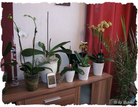 orchideenschrank
