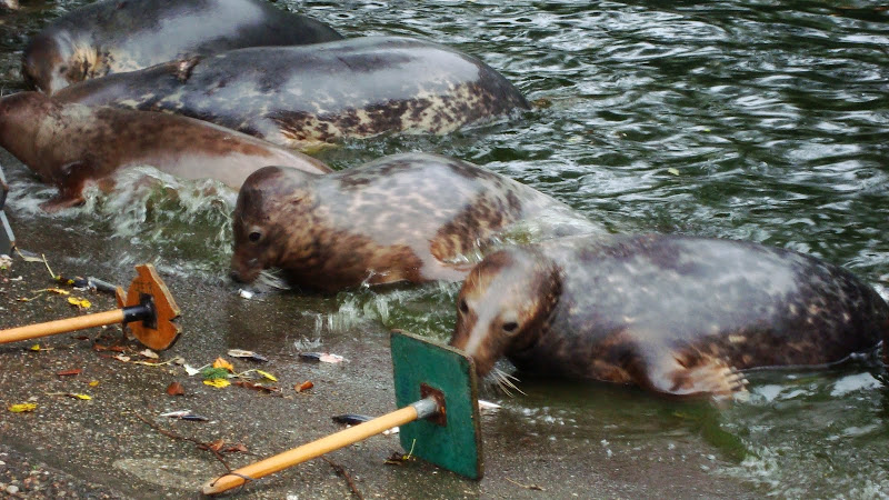 Warszawskie foki