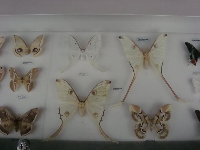 Muzeum Przyrodnicze we Wrocławiu - Motyle
