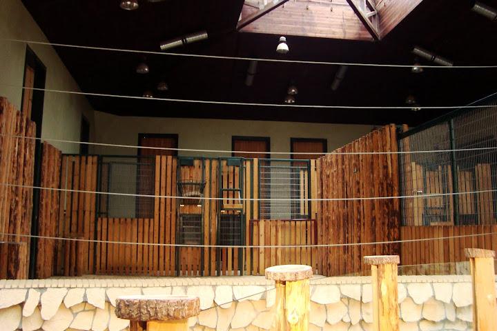 Żyrafiarnia w oliwskim zoo - wnętrze