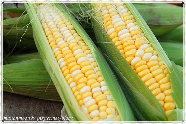 [小農記事]看得到吃不到的- 水果玉米 @ 心是一畝田 :: 痞客邦