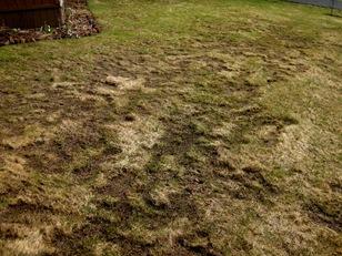 April yard Rocky Point (4)