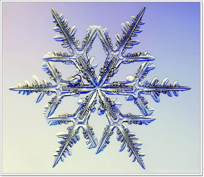 copo de nieve 8