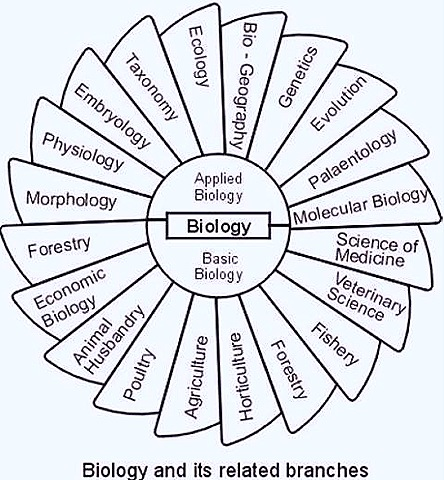 Best courses that can be done after BSc with Biology?