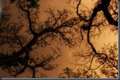 14-Arbor-the sheltering skya